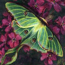 relationships_3_luna_moth